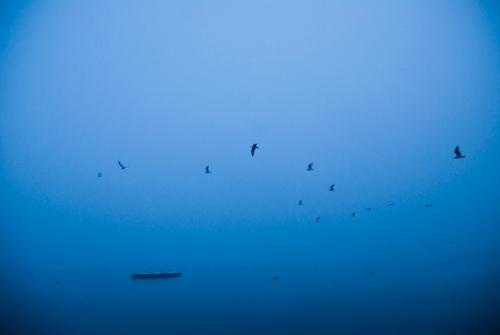 seagullsinfogwebres